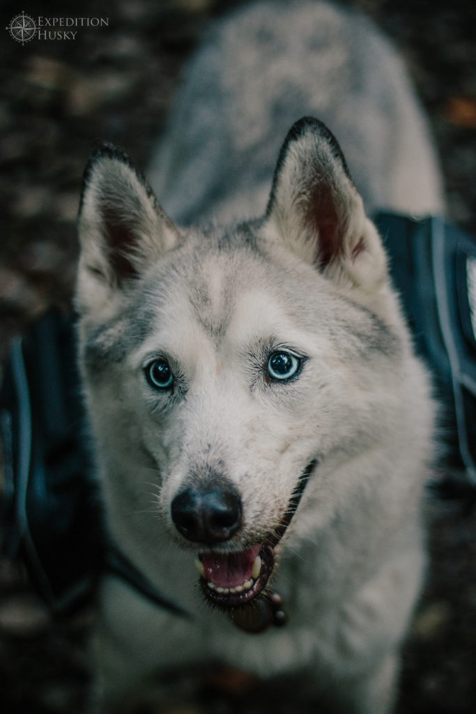 Photo credit: IG @expeditionhusky