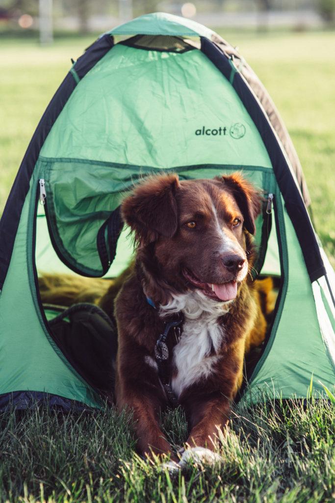 Alcott Explorer Pup Tent – Dogs That Hike