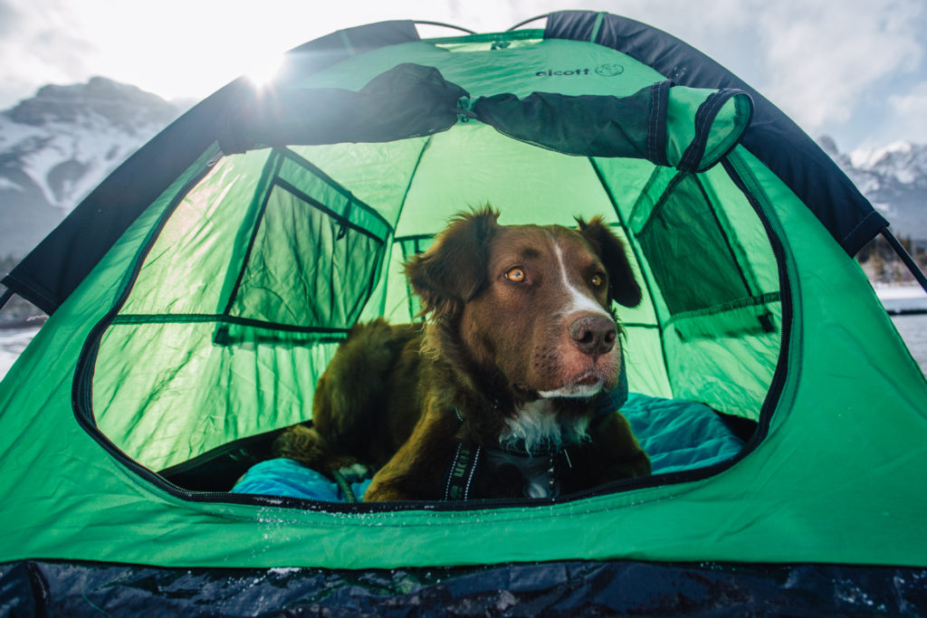 Alcott Explorer Pup Tent – Dogs That Hike