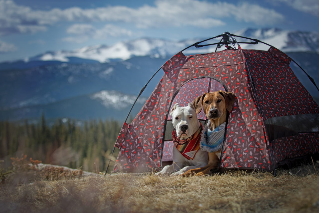 Photo credit @koda_and_rue & P.L.A.Y. Outdoor Dog Tent u2013 Dogs That Hike