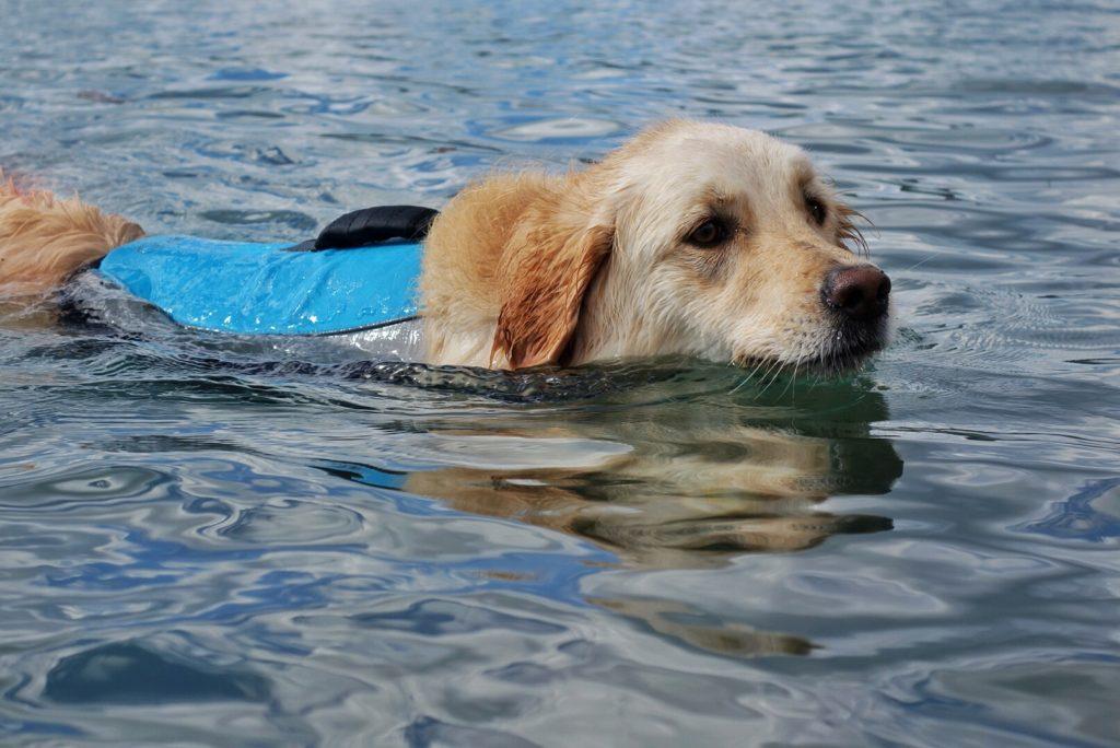 Alcott Mariner Life Jacket Dogs That Hike