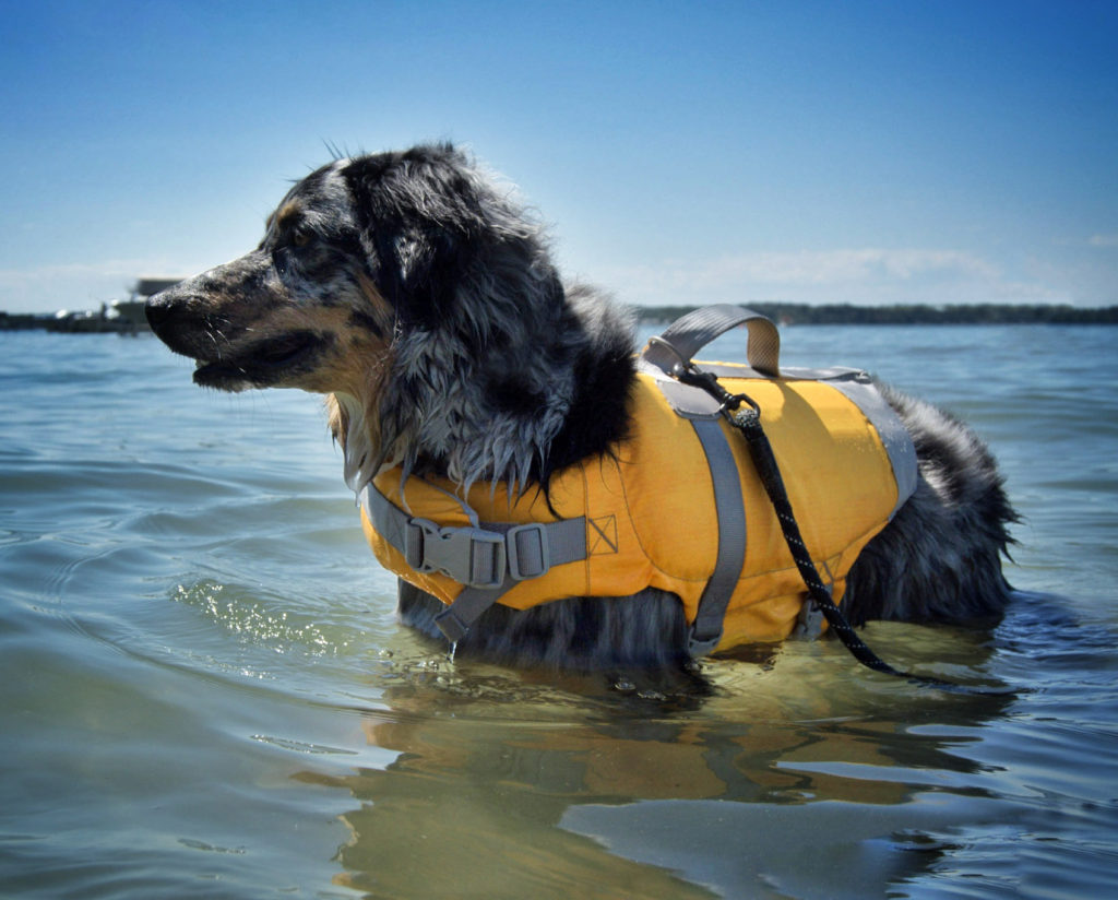 What Type Of Electrolyte Can Dogs Have