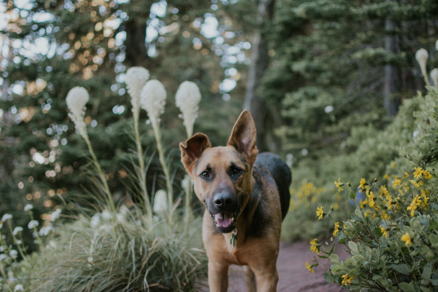 Prioritizing Your Dog: Hiking, Backpacking, and Camping with a Special Needs Dog