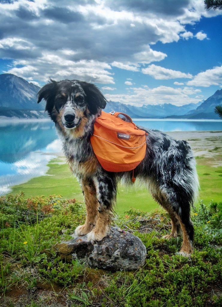 Ruffwear Approach Pack – Dogs That Hike