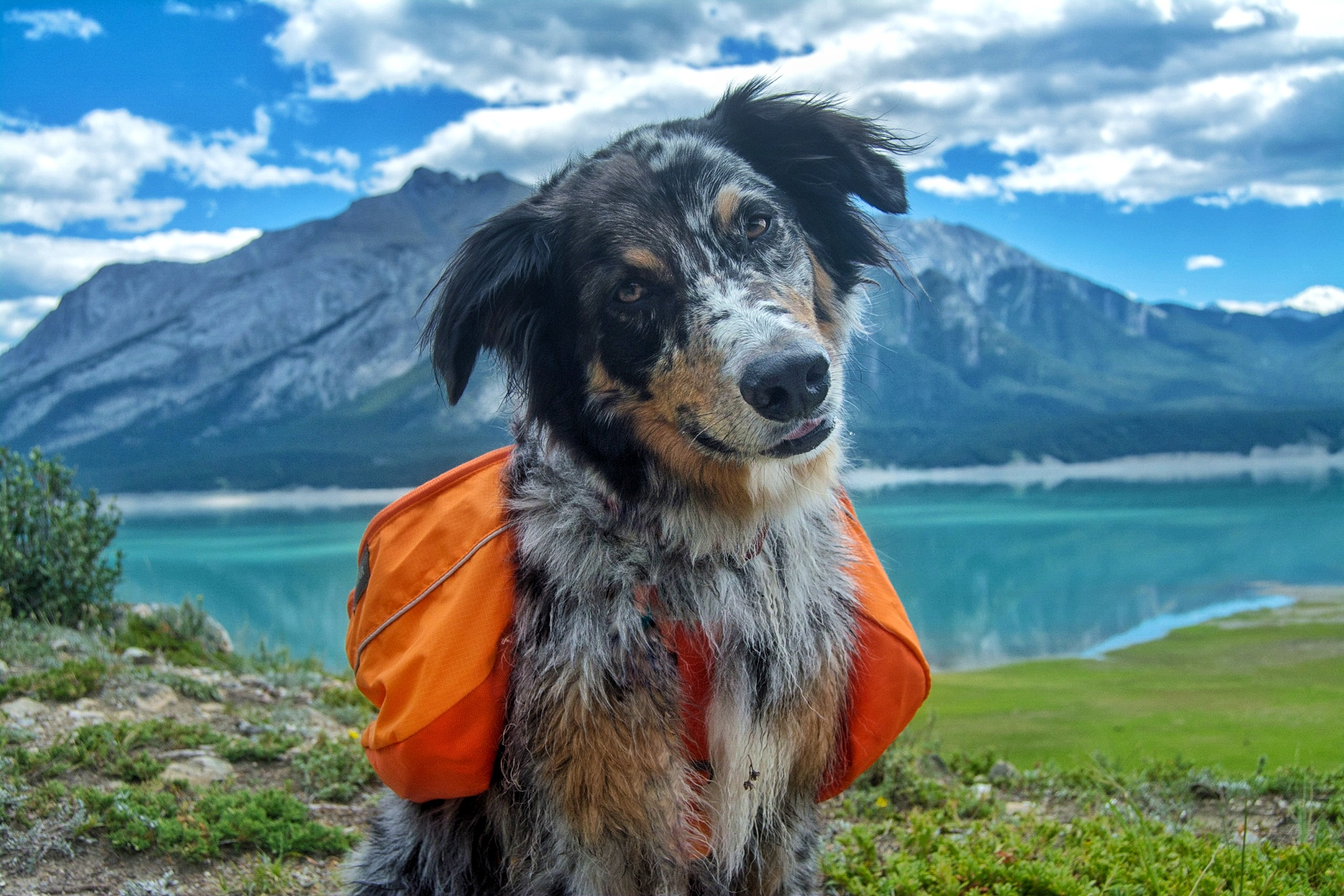 How to Choose the Right Pack for your Pup