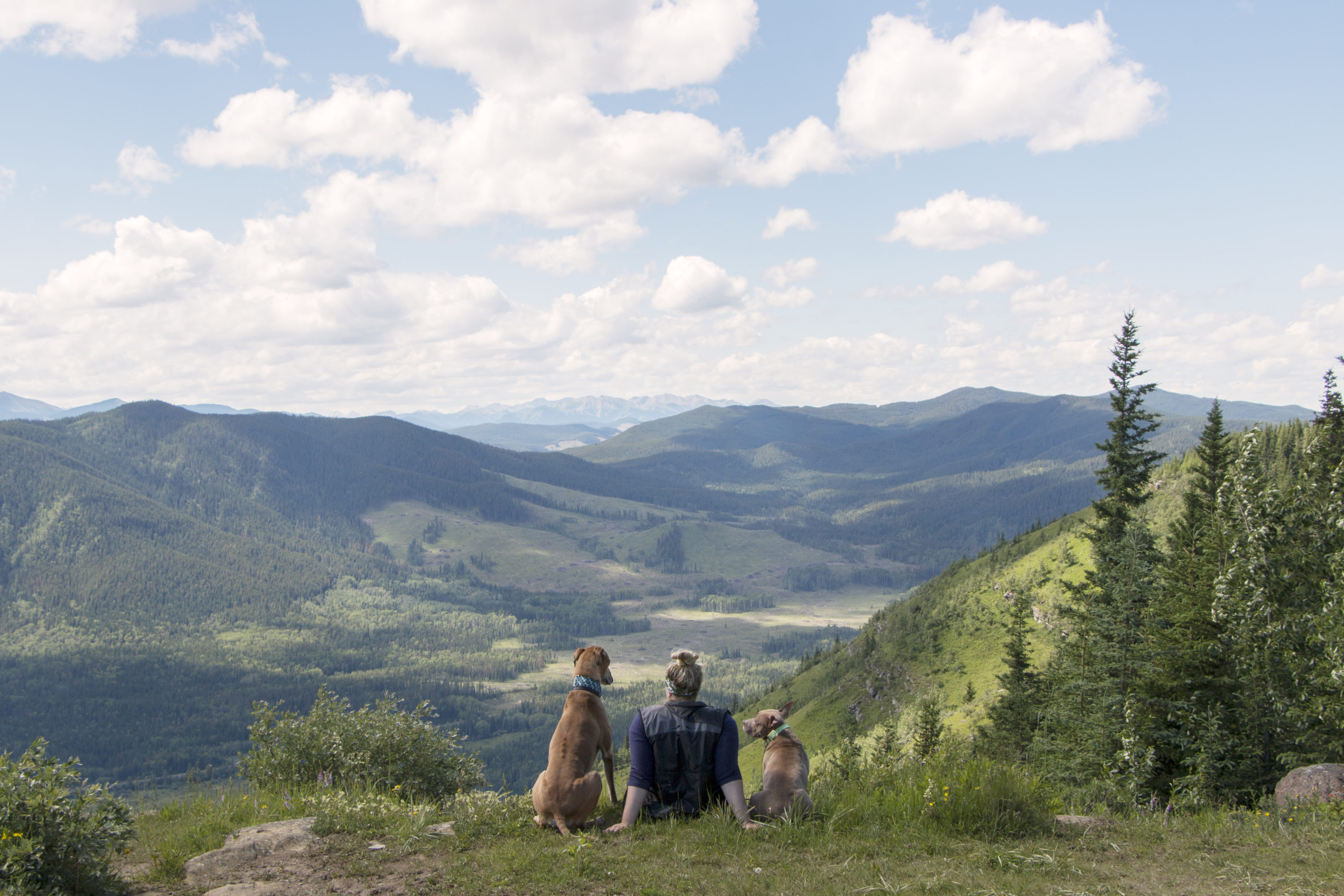 Mountains, Mutts and MS