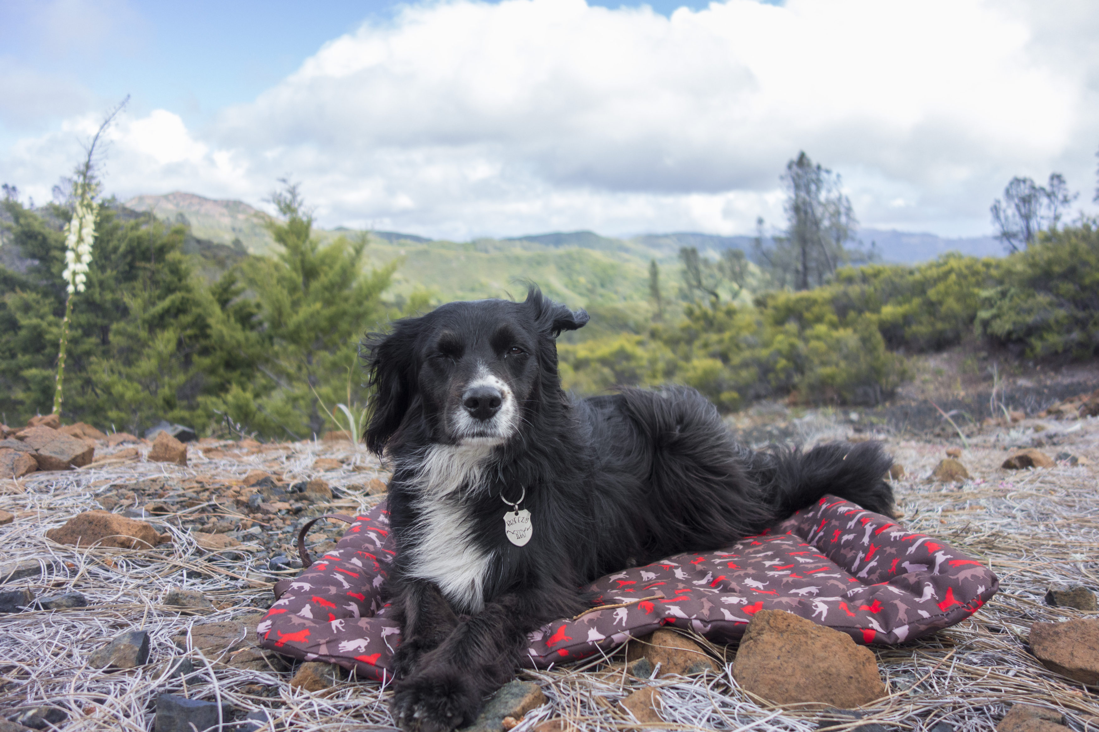 Awe Inspiring Outdoor Dog Bed Dogs That Hike Download Free Architecture Designs Intelgarnamadebymaigaardcom