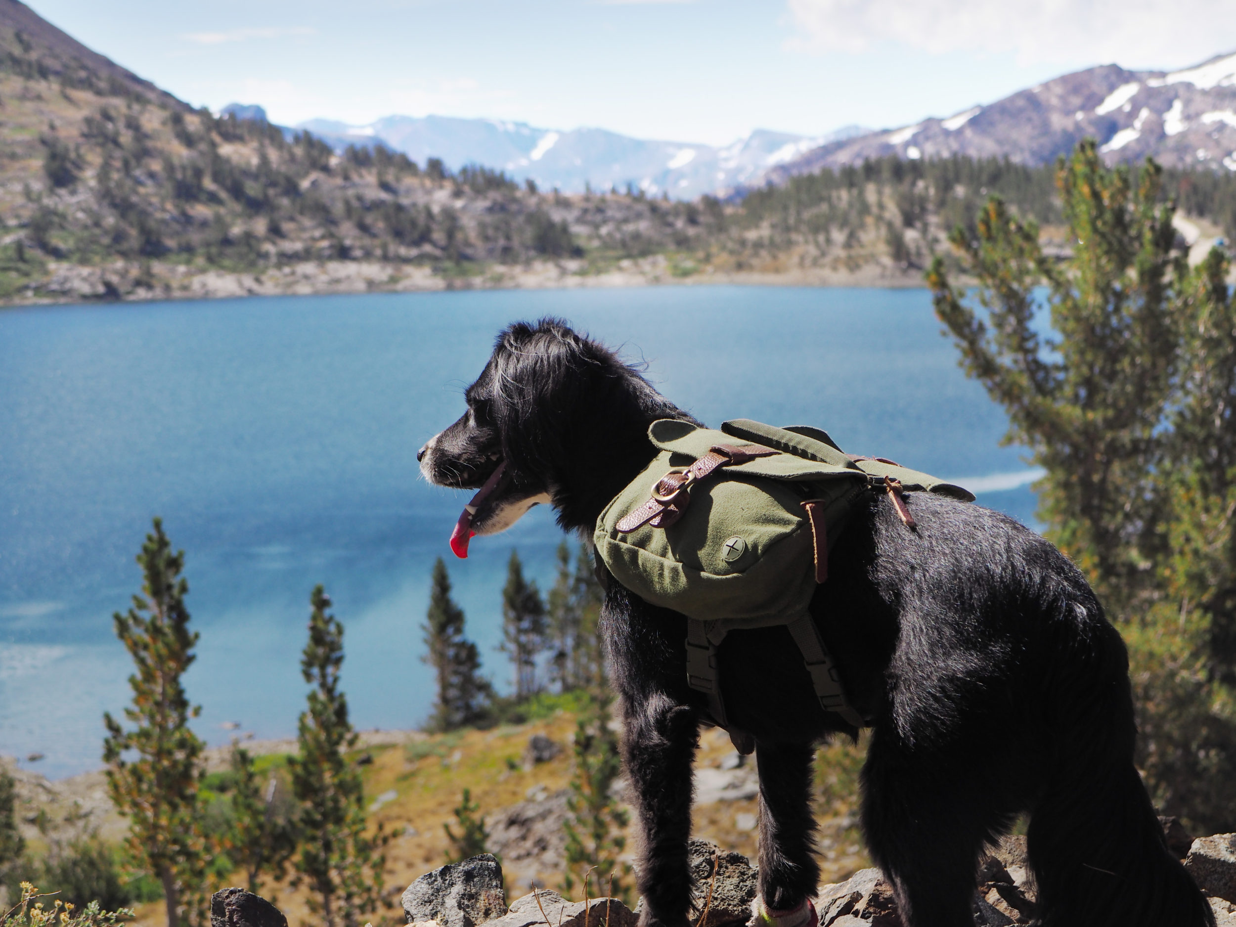 Training Your Dog for the Trail