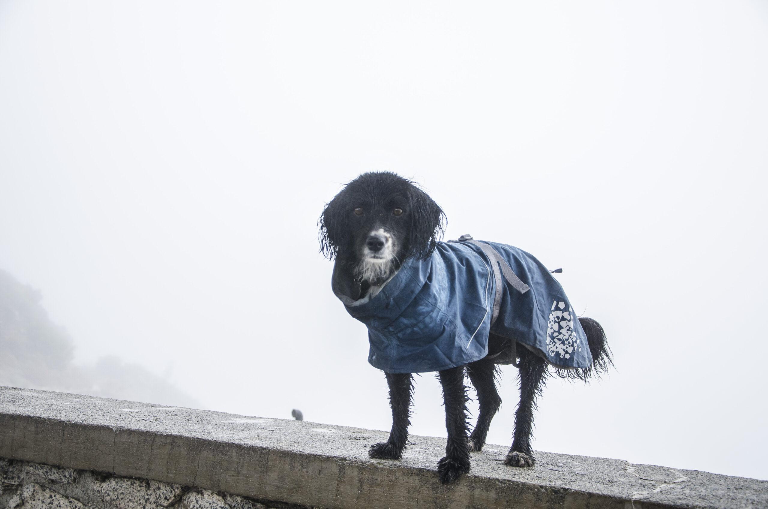 Hurtta Monsoon Coat